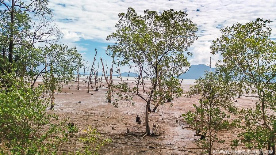Parque Nacional de Bako - Manglares