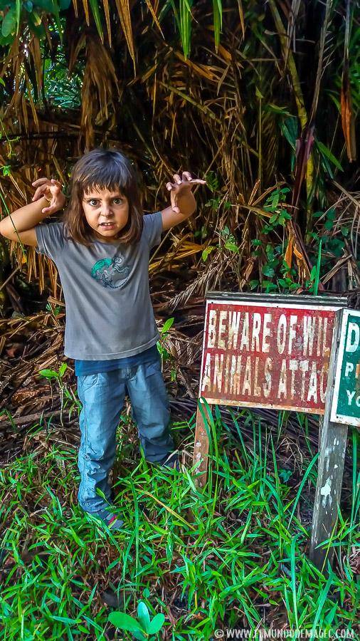 Parque Nacional de Bako - Cuidado con los animales