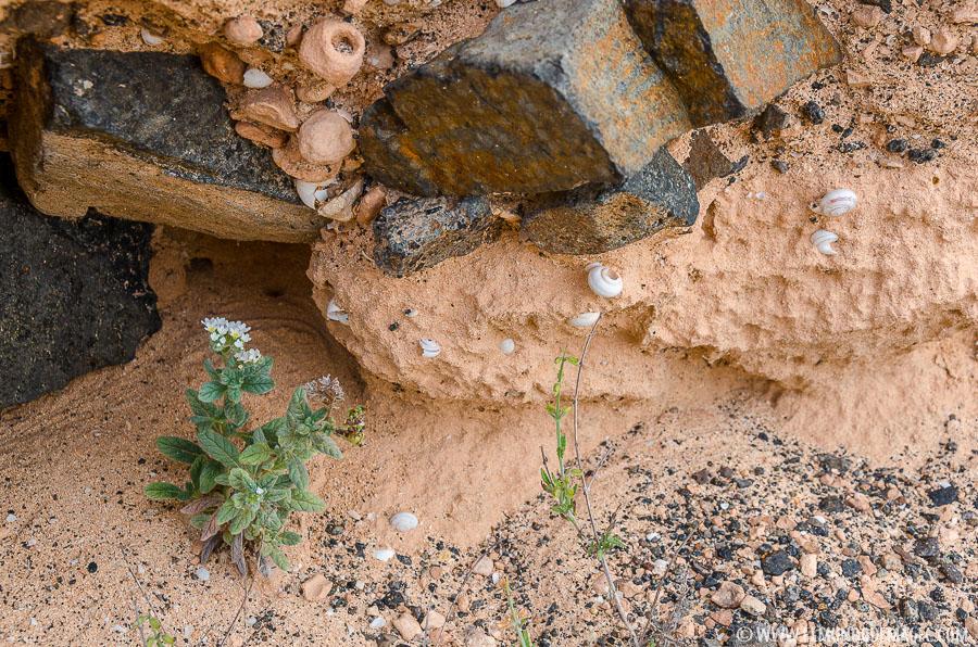 Barranco de los Encantados - flora y caracolillos