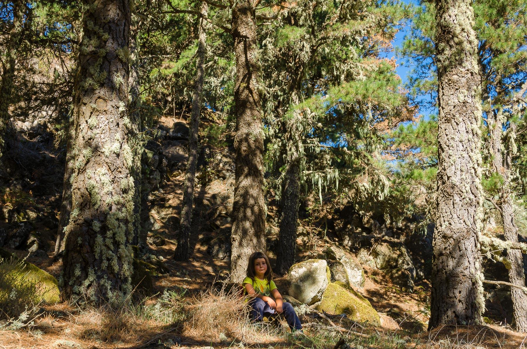 Senderismo en Gran Canaria - Los pinos de Gáldar