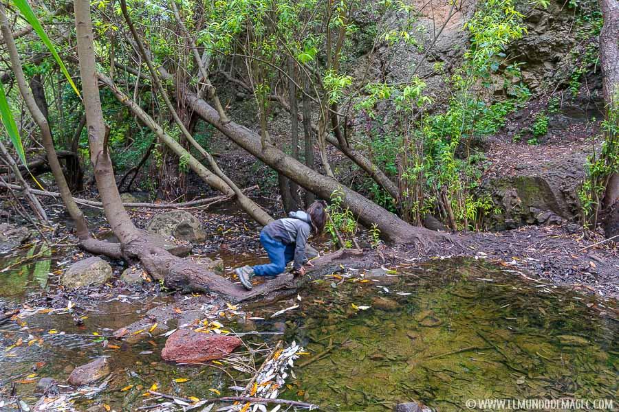 Mucha agua en el barranco de Azuaje