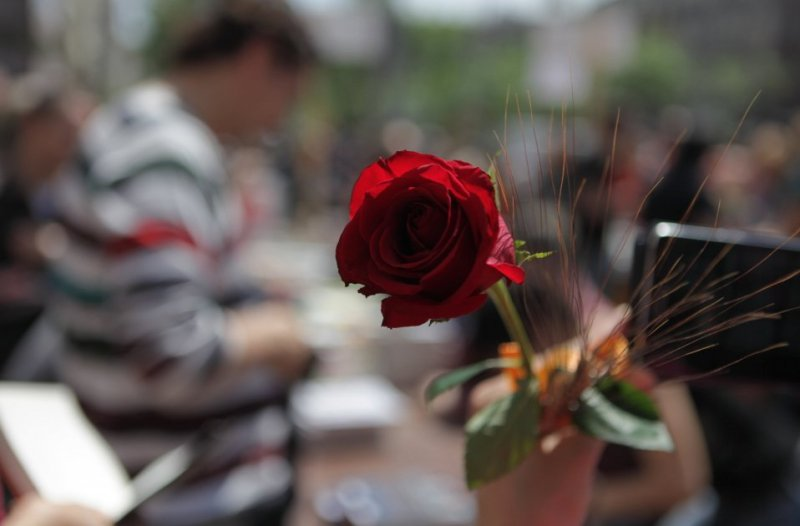 Rosa Sant Jordi Acbn