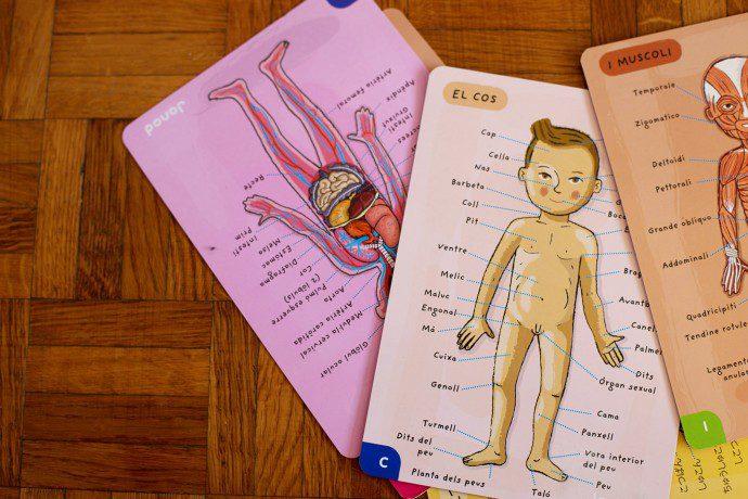 150130 corps humain3 690x460 Maman, cest fait comment à lintérieur ?