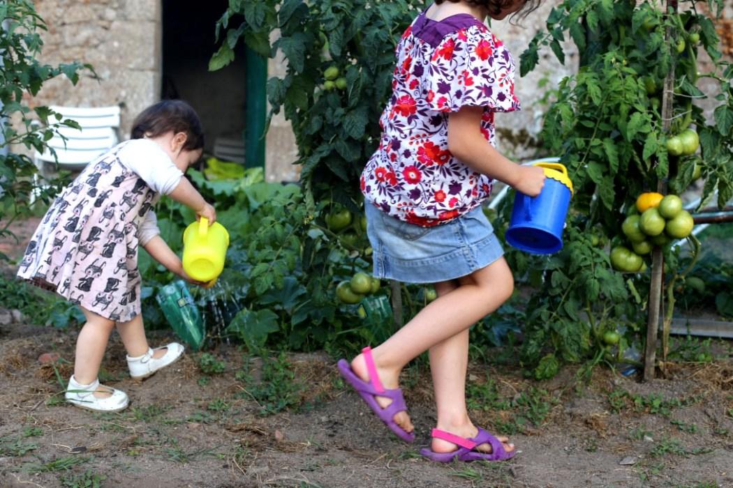 160810 jardin potager 5 Dans le potager de Papy