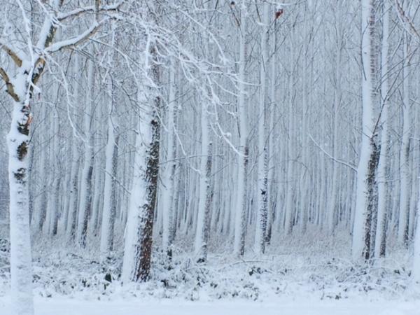 Lemurisch bos in de sneeuw_2.jpeg