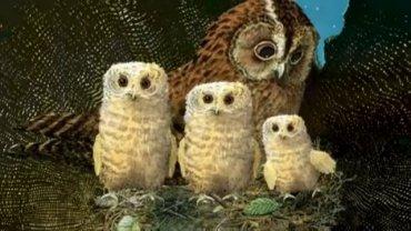 Owl Babies Year 4