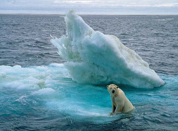 Quince años en el Ártico