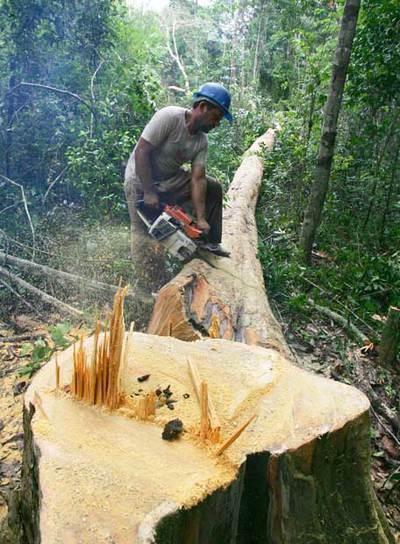 Explotación ilegal de madera en Arame