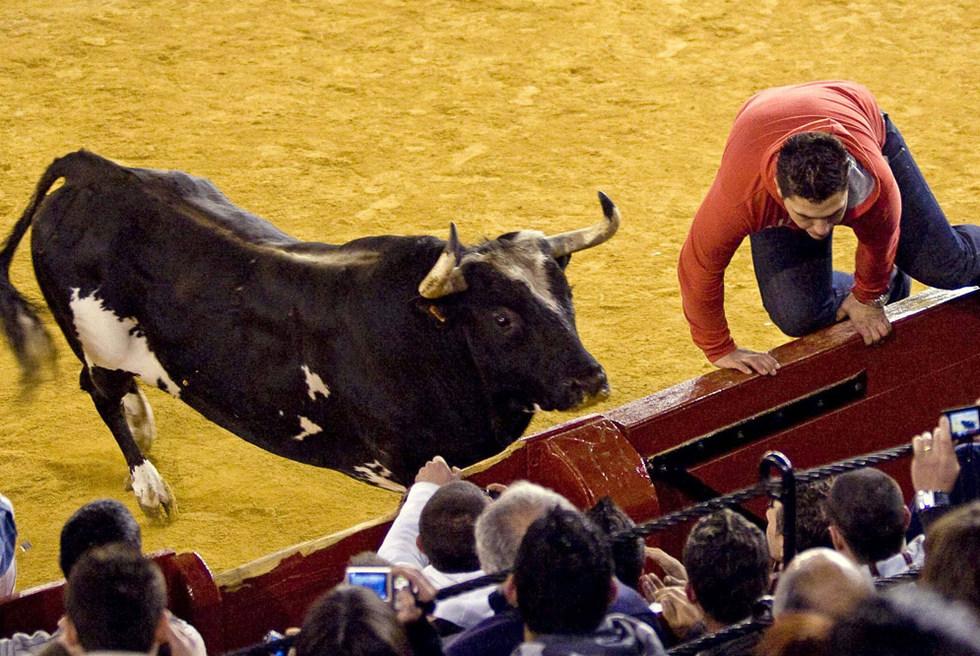 Un mozo salta la barrera ante la embestida del toro 'Ratón '