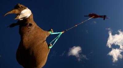 El vuelo del Elefante