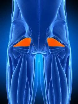 piriformis muscolo azzurro arancione el paso tx