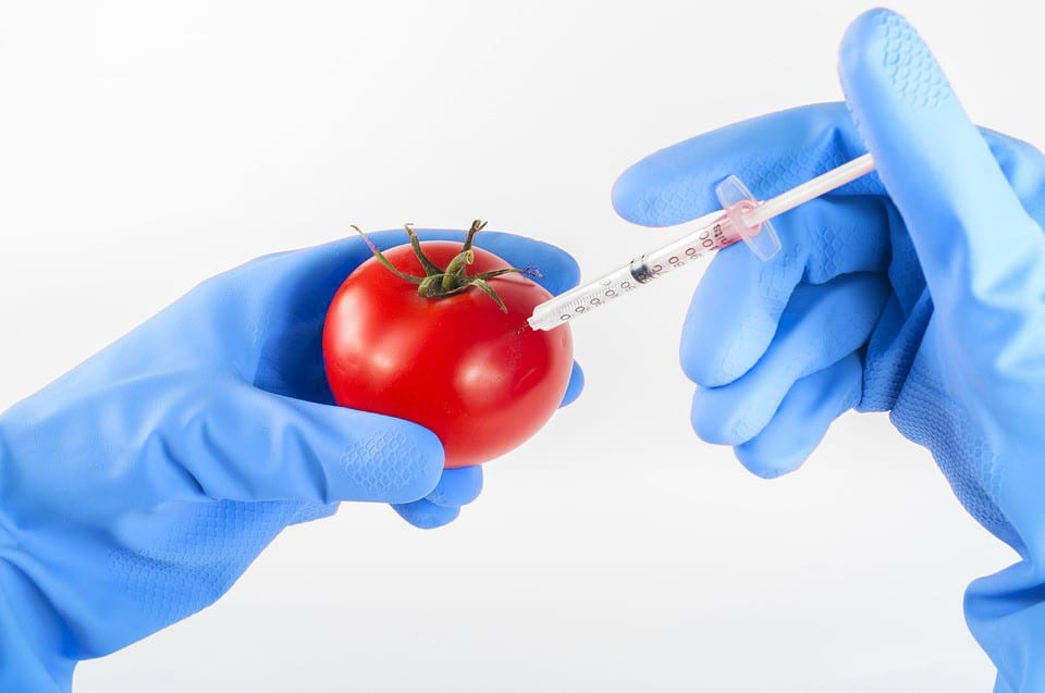 The Health Risks Of Genetically Modified (GM) Foods