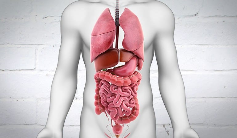 Junction Complex Structure & Function in the GI Tract