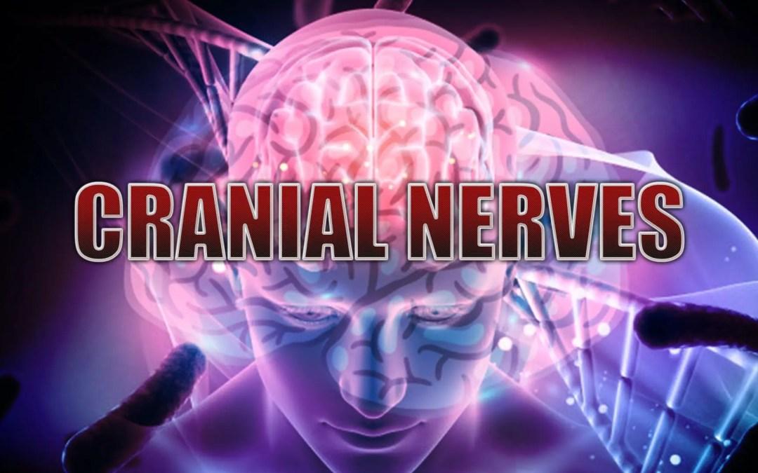 Nervios craneales: Introducción   El Paso, TX.