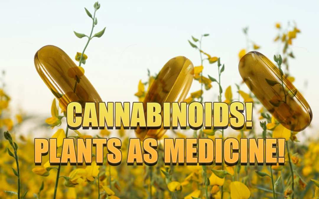 Cannabinoids And Plant Medicine