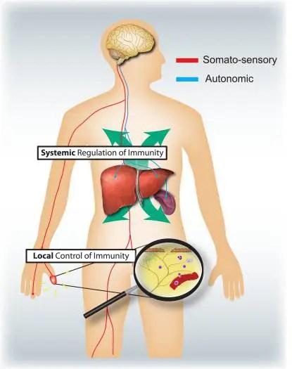 ചിത്രം 4 Sensory and Autonomic Nervous Systems | എൽ പാസോ, ടിഎക്സ് ചിപ്പിക്കൽ ട്രീറ്റ്മെന്റ്