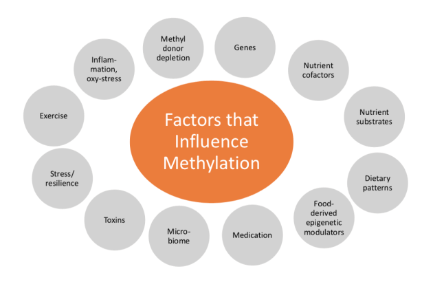 Factors for Methylation | El Paso, TX Chiropractor