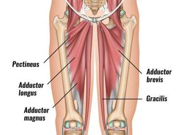 groin-muscles-diagram-3 | El Paso, TX Chiropractor
