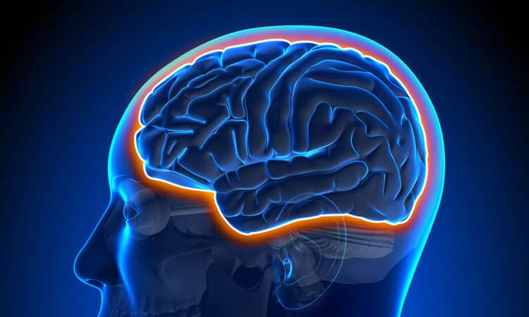 Functional Neurology: The Blood-Brain Barrier and Brain Health