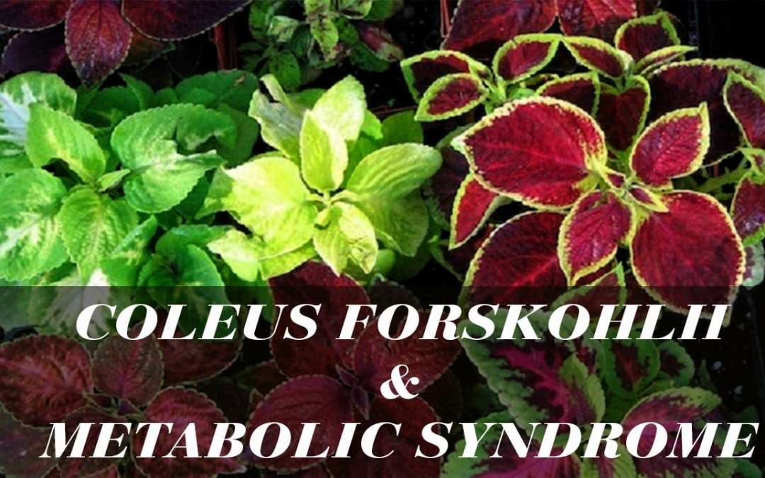 Coleus forskohlii and Metabolic Syndrome
