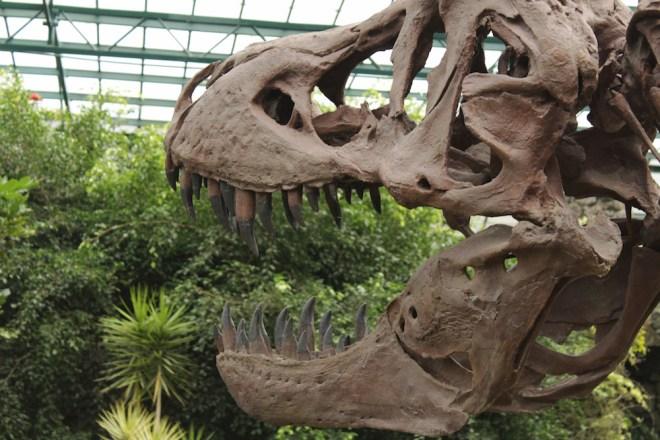 En España hay interesantes parques temáticos especializados en estos seres prehistóricos (iStock).
