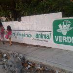 Los verdes cambian estrategias en Quintana Roo, pero?…