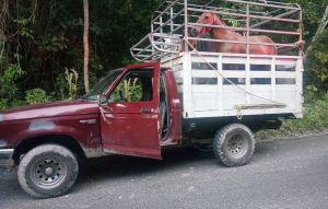 vehiculo-detenido