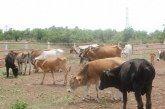 Gobierno del Estado, sigue sin aportar recursos para campañas zoosanitarias