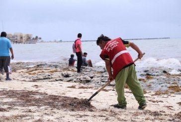 Refuerzan limpieza de sargazo y retiro de basura en Solidaridad