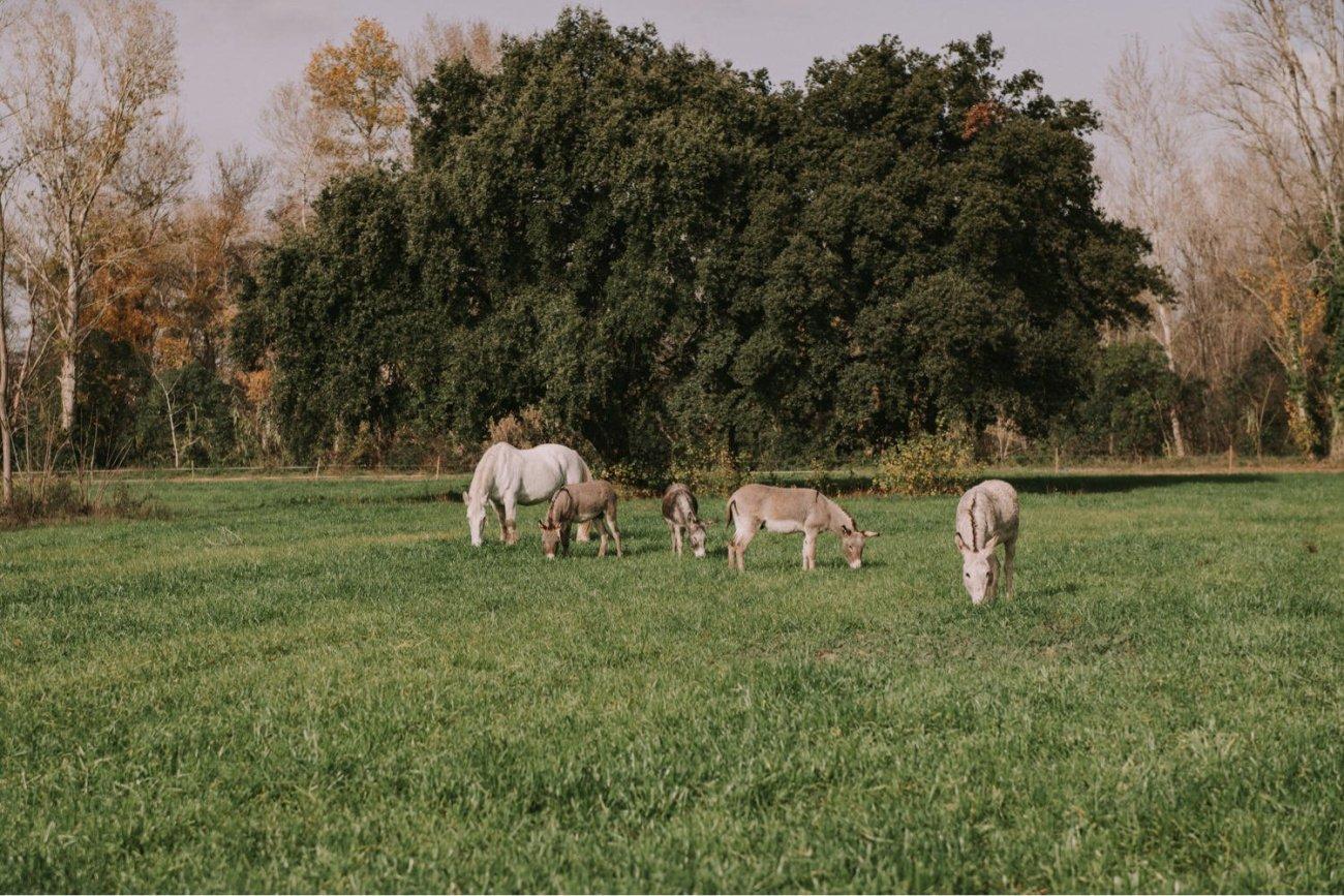 burros en la farinera de sant lluis