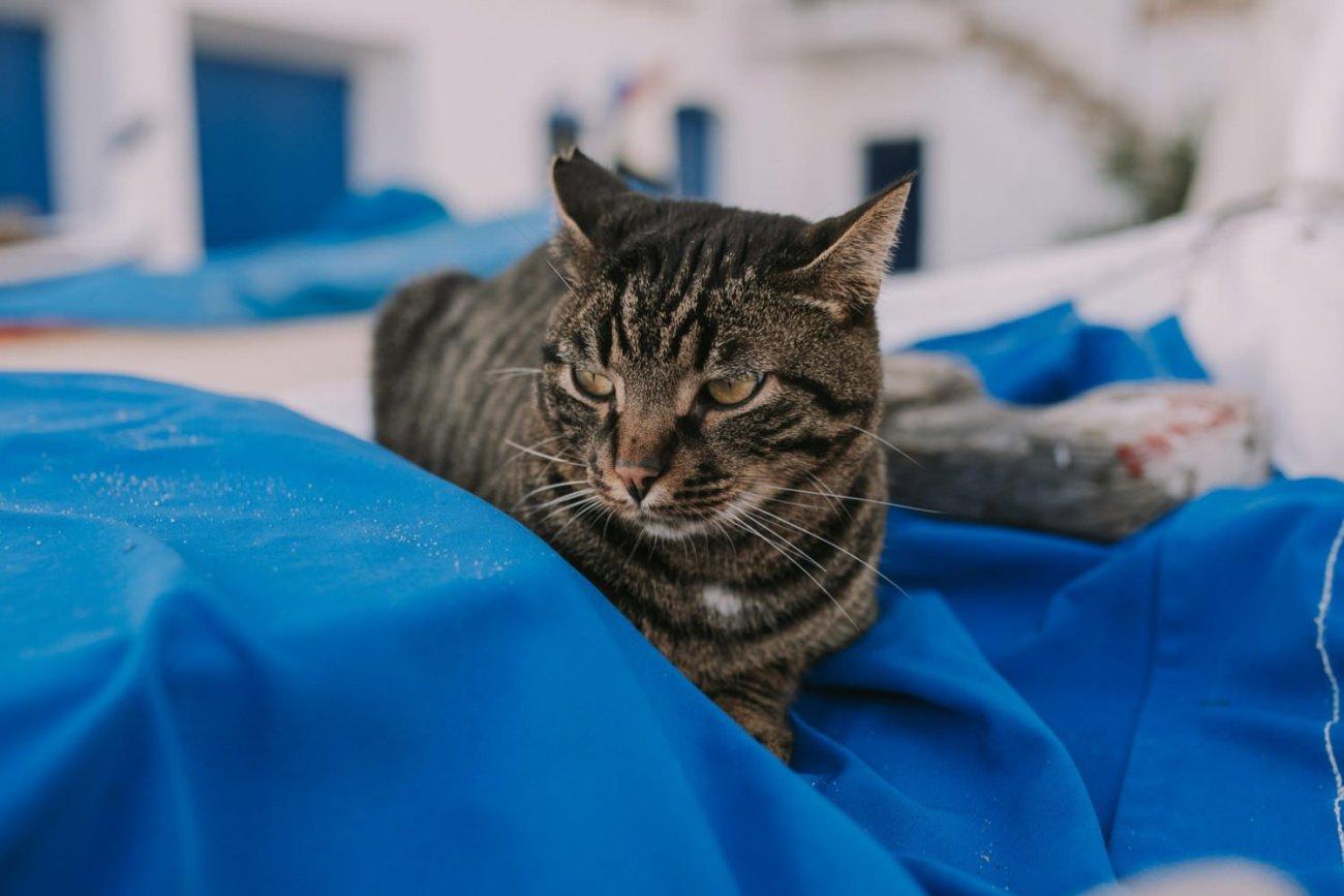 gatos calella de palafrugell