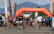 cani running 02