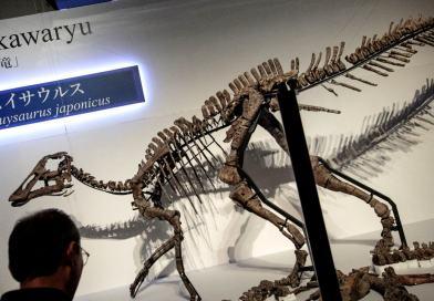 Fósil de dinosaurio herbívoro descubierto en Japón