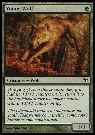 LOBO JOVEN / YOUNG WOLF (ASCENSO SINIESTRO)