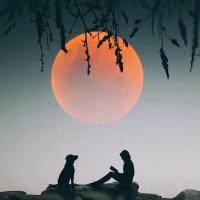 Pregúntale A La Luna...