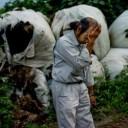 A Japanese farmer in Odaka. Photo credit NYTimes.
