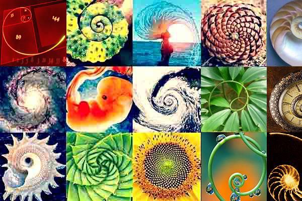 El espiral es una formación natural frecuente en el reino de la naturaleza, evoca la evolución de una fuerza, de un estado.