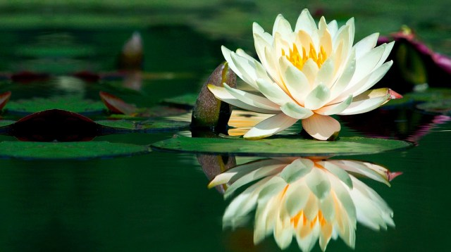 Imagenes-Flores-Hermosas-2