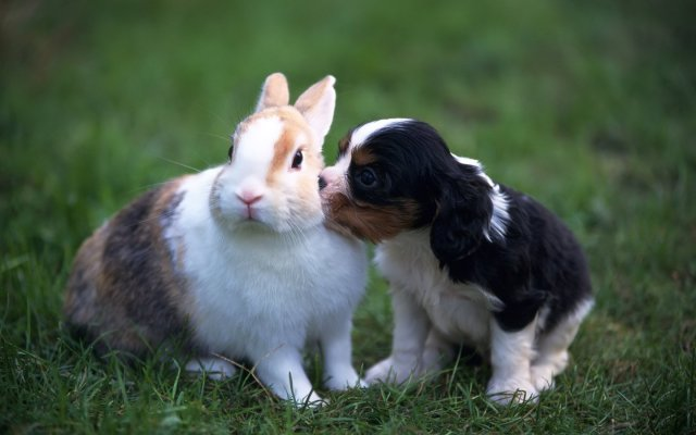 conejo-perrito-6