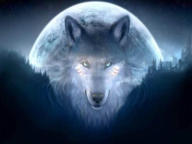 Un lobo aullando de tristeza