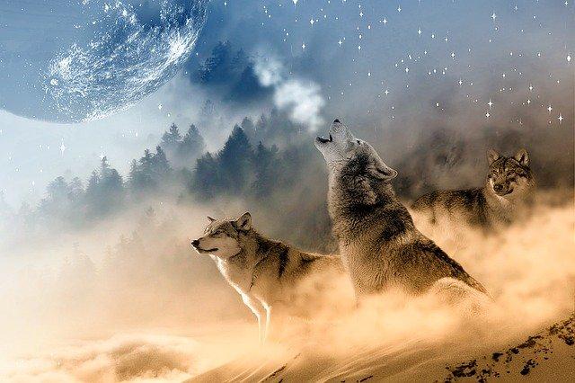 Enero: Luna de Lobo o Luna de Nieve
