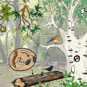 Educatieve natuur illustratie