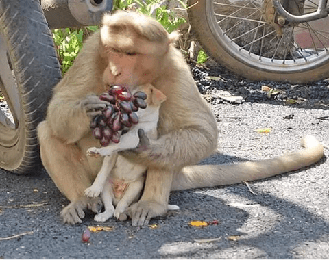 Touching Story: Monkey Adopts Lost Puppy