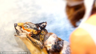 Bodypainter transforms three naked women into a howling Wolf 3