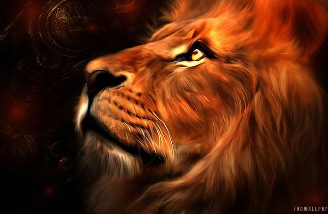 Lion in my Heart - elsieisy blog