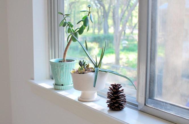 My Windowsill Love - elsieisy blog