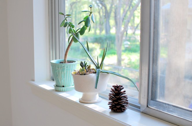 My Windowsill Love - elsieisy blog