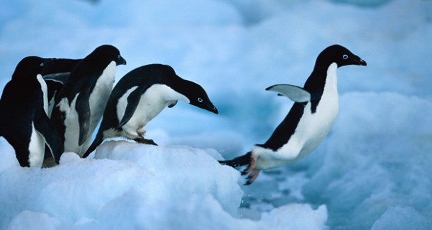 5 Bitter Lessons For Lovers From The Viral Penguin Video - elsieisy blog