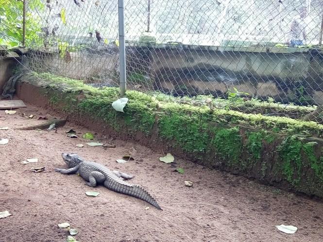 crocodile - agodi gardens - elsieisy blog
