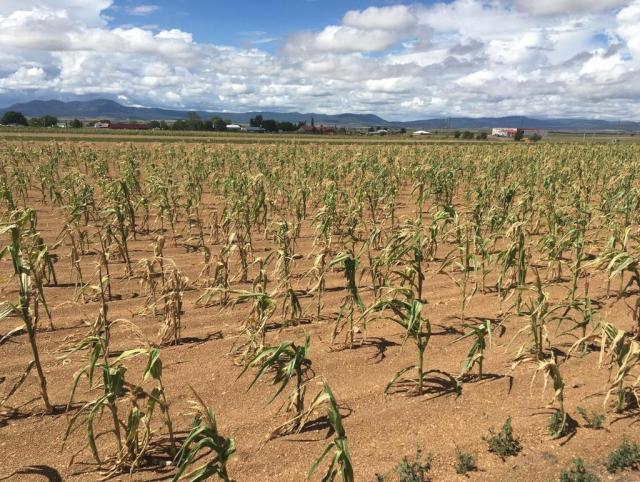 Descartan poder apelar 'sequía extrema' en México, El Siglo de Torreón